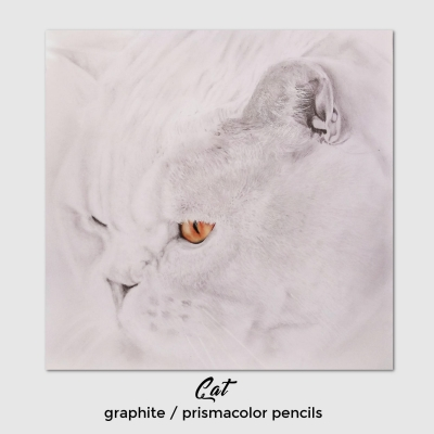 Cat-prismacolor-Elisa-Neri.jpg